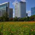 Photos: 大都会の花園