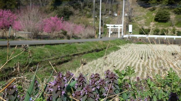 遠くに見える鳥居は熊野神社
