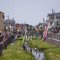Photos: 鯉のぼり