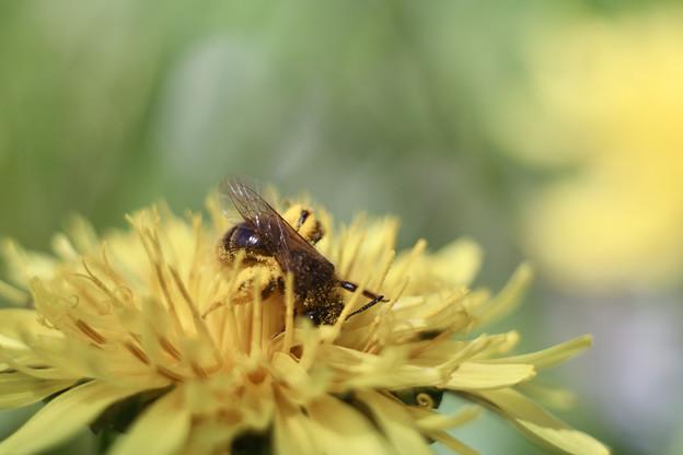 蜂から学べ