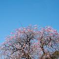Photos: 梅園散歩2