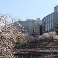 市ヶ谷の桜 IMG_62278