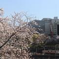 市ヶ谷の桜 IMG_62279