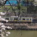 Photos: 桜とE231系500番台総武線 IMG_62527