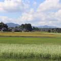 秋の田園風景 IMG_82780