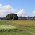 秋の田園風景 IMG_82781
