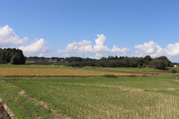 秋の田園風景 IMG_82783