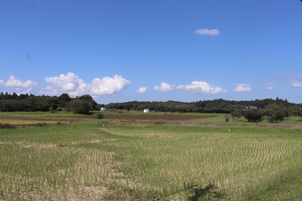秋の田園風景 IMG_82784