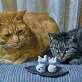 Photos: 猫のお雛様