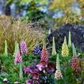 Photos: 花でいっぱい