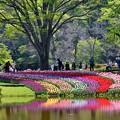Photos: 春の彩り
