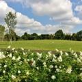 Photos: 新しい公園