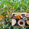 Photos: 秋の味覚(2)