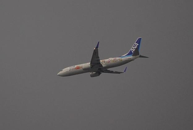 Flower JET    B737     大阪上空 伊丹へ向かう