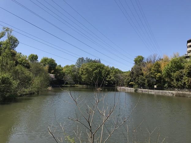 高町池(山田西公園)