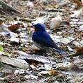 青い鳥見つけた◇\(^o^)/◆