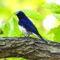見つけた青い鳥、見つけたしあわせを運ぶ小鳥