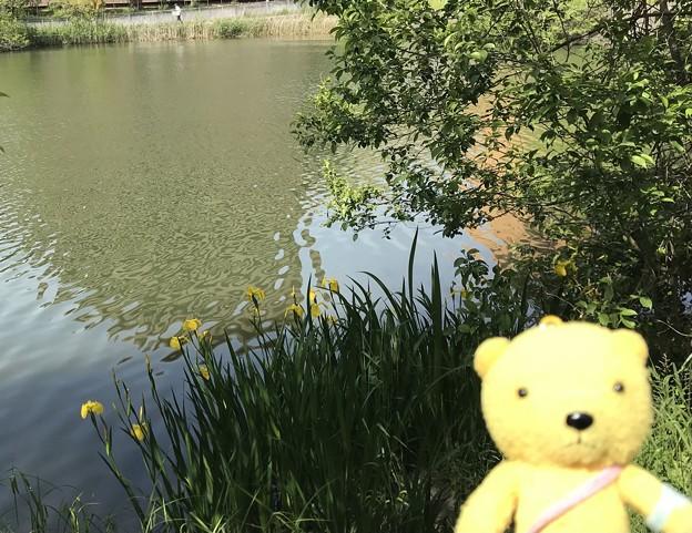 山田西公園高町池