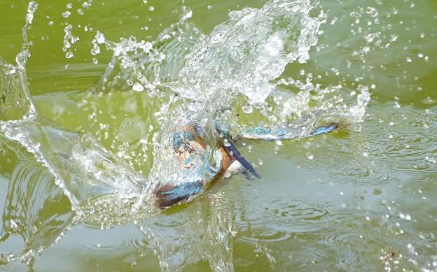 Photos: お魚キャッチなう