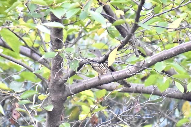 Photos: 枝が邪魔なんですけど…。゚(゚´Д`゚)゚。