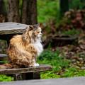 公園の監視員