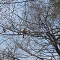 Photos: 樹上に止まっていたので