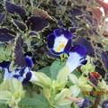 後ろの紫色の葉っぱの方が気になるが