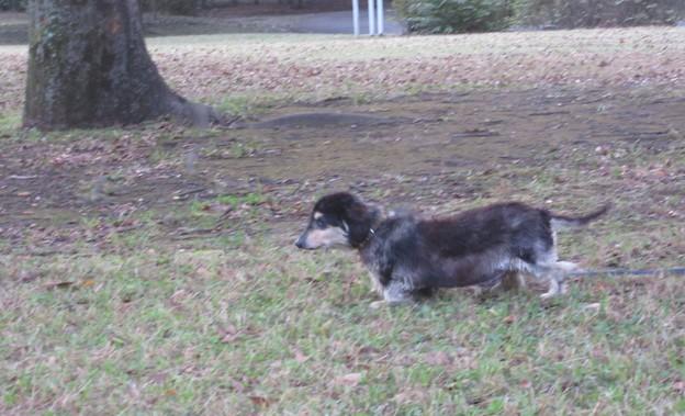 ラジオ体操毎朝の参加常連犬