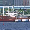 東京湾p1100900_l