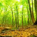 新緑の大地の躍動