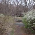 Photos: 武蔵野公園散歩道