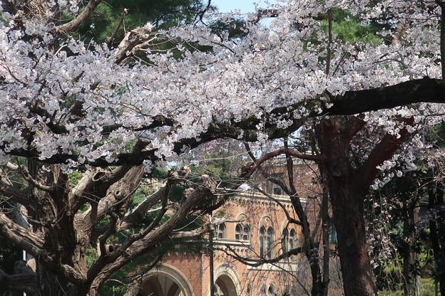 一橋大学(大学通りより)
