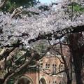 Photos: 一橋大学(大学通りより)