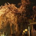 Photos: 2021梅岩寺の枝垂れ桜1