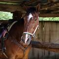 Photos: 牧場の馬