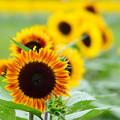 Photos: 夏の色