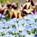 Photos: 春の妖精