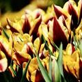 春いちばん