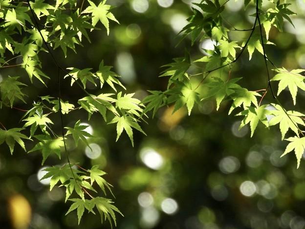 新緑の喜び