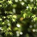 Photos: 新緑の喜び