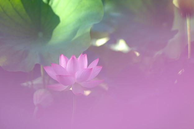 Photos: 朝の香