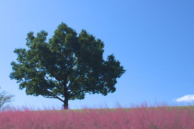 赤い穂の揺れる丘