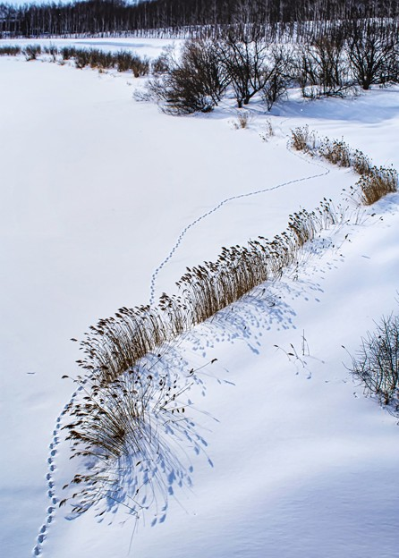 モエレ沼 雪景