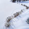 Photos: モエレ沼 雪景