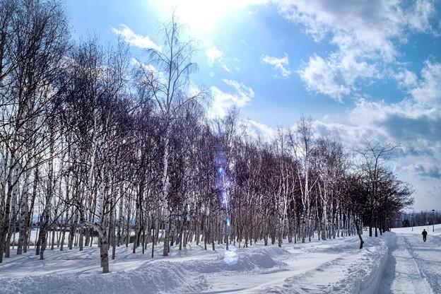 冬木立-逆光-