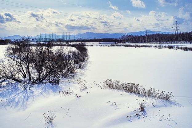 鉄塔のある風景/春初の沼