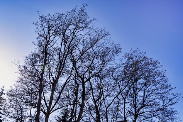 「西の空は冷温帯落葉広葉樹林」