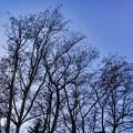 Photos: 「西の空は冷温帯落葉広葉樹林」