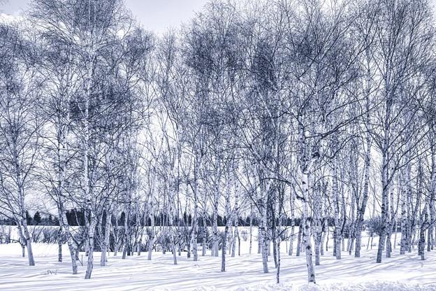 モノクロームの冬景
