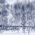Photos: モノクロームの冬景